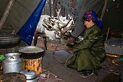 A reindeer entering the teepee of a Tsaatan women for food, northern province of Khovsgol, Khovsgol, Mongolia
