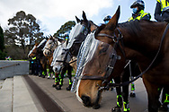 MELBOURNE, VIC - SEPTEMBER 05: Mounted Police stand fast holding protesters back during the Anti-Lockdown Protest on September 05, 2020 in Sydney, Australia. Stage 4 restrictions are in place from 6pm on Sunday 2 August for metropolitan Melbourne. This includes a curfew from 8pm to 5am every evening. During this time people are only allowed to leave their house for work, and essential health, care or safety reasons. (Photo by Dave Hewison/Speed Media)
