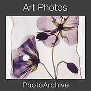 Fine Art Photo Prints by Photographer Paul E Williams