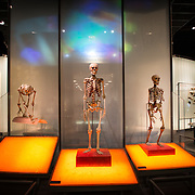 Human evolution exhibit at the Hall of Human Origins at the Museum of Natural History in New York's Upper West Side neighborhood, adjacent to Central Park.