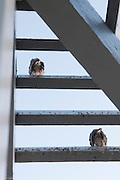 Two birds sit on the roof of a gazebo. Missoula Photographer