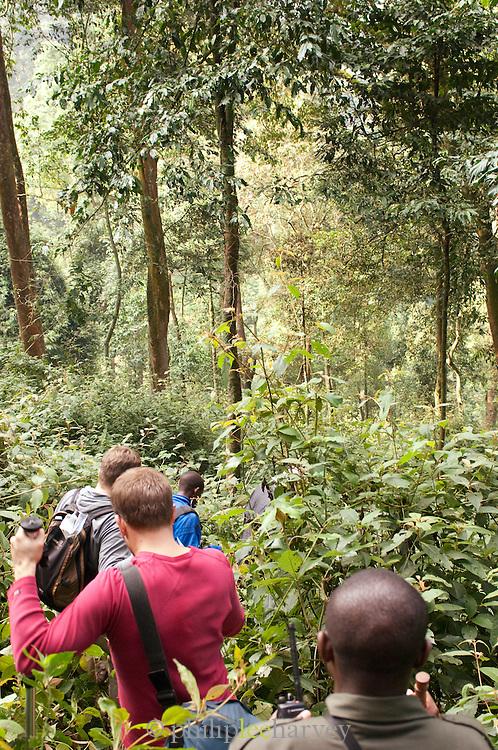 A group of people trekking through Nyungwe National Park, Rwanda