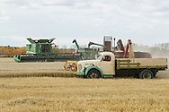 Photo Randy Vanderveen<br /> LaGlace, Alberta<br /> 2015-09-26 <br /> Gary Dixon unloads an old Massey Harris combine into Gerald Logan's 1949 Reo while a current John Deere combine waits as another unit unloads into a grain buggy as they harvest  Canada Prairie Spring (CPS) wheat takes place on Gary and wife Shirley's land for the Bear Lake  Growing Project. The grain will be sold and money donated to the Canadian Food Grains Bank. This year the project had a number of groups and individuals from around the South Peace sponsor an acre to cover the input costs so all the money from the grain sold could be donated.