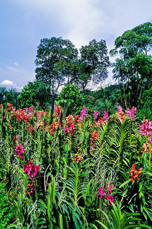 The National Orchid Garden, Singapore Botanic Gardens, Singapore