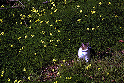 D. Ross Cameron 1/01<br /> <br /> Ollie the cat sits in back of 3987 Coolidge Avenue in Oakland, Calif. on a warm winter day.