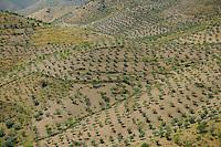 Olive farm, Côa valley,<br /> Portugal
