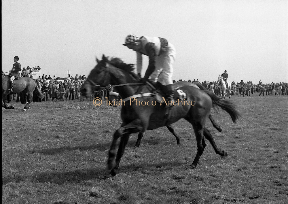 """Irish Distillers Grand National at Fairyhouse.  (M66)..1979..16.04.1979..04.16.1979..16th April 1979..The Irish Distillers Grand National was run today at Fairyhouse Racecourse, Co Meath.The race over 3.5miles is valued at £20,000. the winning trainer will also receive the Tom Dreaper,Perpetual Trophy which will be presented by Mrs Betty Dreaper..Image shows no6 """"Prince Rock"""" cantering home at the end of the Grand National at Fairyhouse."""