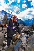 A nomadic shepherd herds sheep and goats over the Zojila Pass; Kashmir, Jammu and Kashmir State; India.