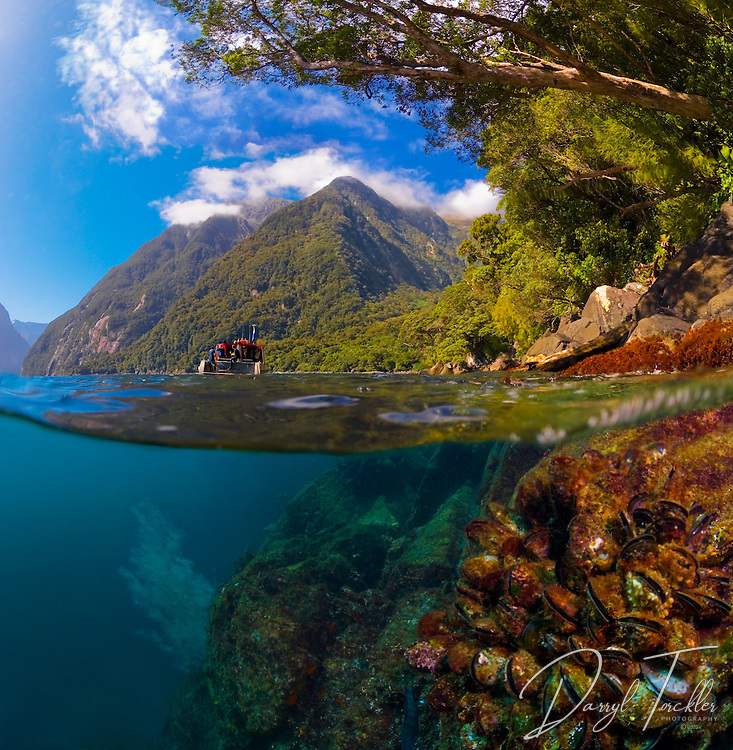 On a calm summer day, it was possible to take this split-level image. It had not rained for 3 weeks.  Usually the murky freshwater layer (1 to 10m)  runs out over the saltwater like a river, making split-level images normally impossible to achieve. Milford Sound, Fiordland. New Zealand