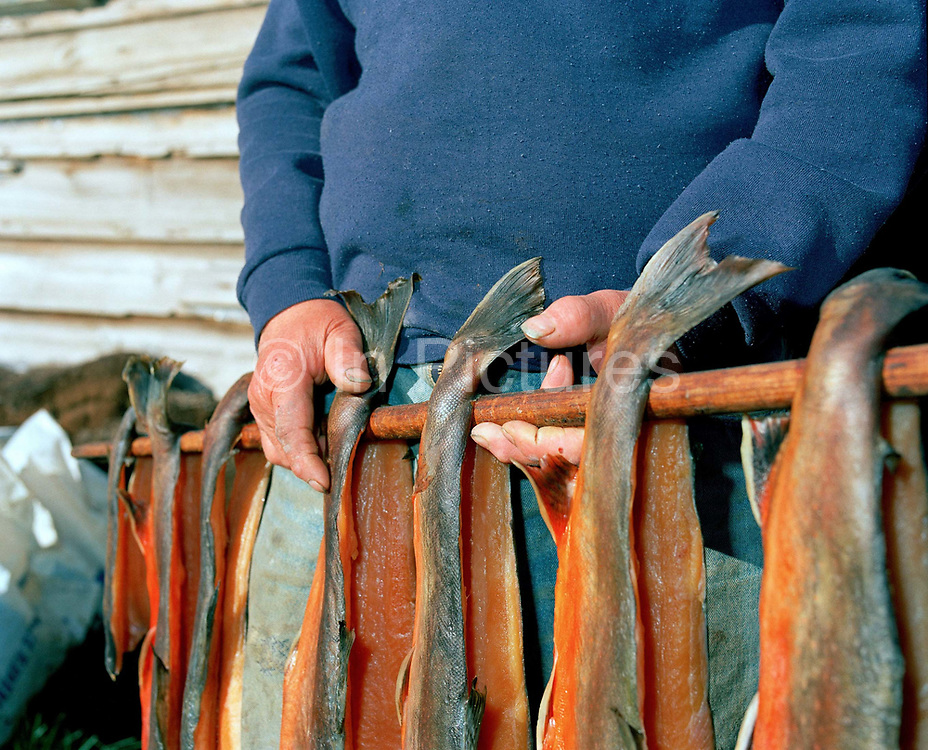 Jon, a farmer in the Lake Myvatn area, smoking salmon from the nearby river Lax, Iceland. The fish are cleaned, washed and put in salt water, washed again, turned inside out and smoked for 2-3 days. The fish are smoked over dried sheep dung in a turf covered smoking hut.
