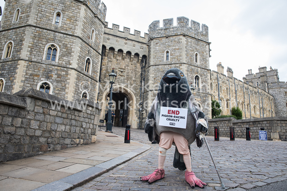 Windsor, UK. 1 July, 2020. A bandaged giant pigeon on crutches holds a sign reading 'End Pigeon-Racing Cruelty' at a protest by PETA UK activists outside Windsor Castle. Animal rights charity PETA UK is calling on the Queen, currently isolating at Windsor Castle, to cut ties with pigeon racing following a PETA US investigation which revealed that all eight birds sent by the Queen to participate in the 2020 South African Million Dollar Pigeon Race (SAMDPR) died in quarantine and that fewer than a quarter of the birds entered for the race subsequently complete it.