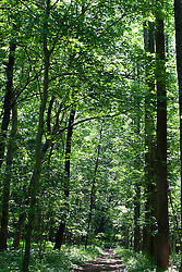 09 June 2012:   walking path through timber at Funks Grove