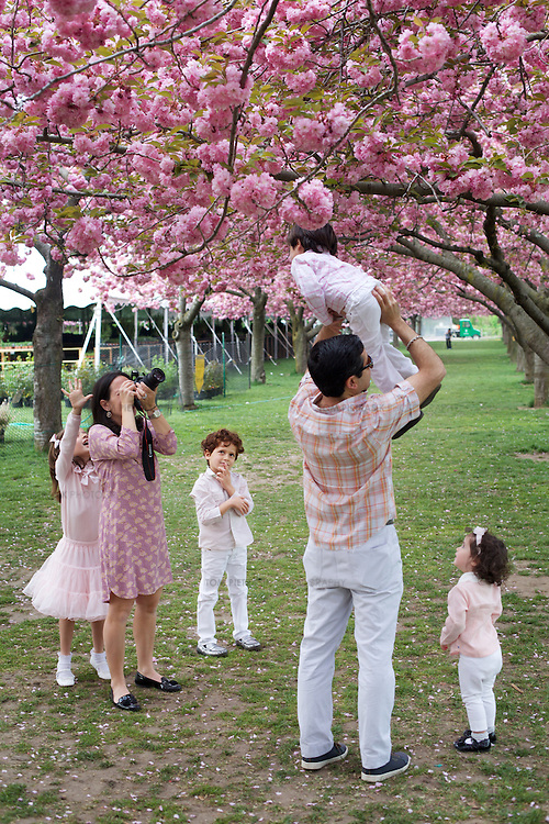 Spring blossom in Brooklyn botanic garden.<br /> <br /> Photo: Tom Pietrasik<br /> New York City, USA <br /> May 5th 2015