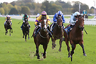 JONAH JONES (2) ridden by Richard Kingscote and trained by Tom Dascombe winning The coral.co.uk ebfstallions.com Novice Stakes over 6f (£15,000)   during the October Finale meeting at York Racecourse, York, United Kingdom on 13 October 2018. Pic Mick Atkins
