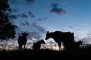Goshen, New York - Farm scenes on June30, 2016.