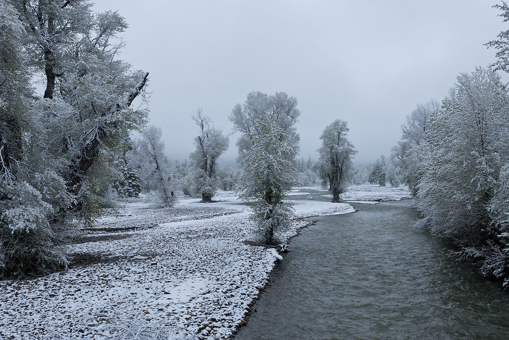 Pilgrim Creek a Snake River/Jackson Lake Tributary flocked in white with first snow of the season. Licensing and Open Edition Prints.