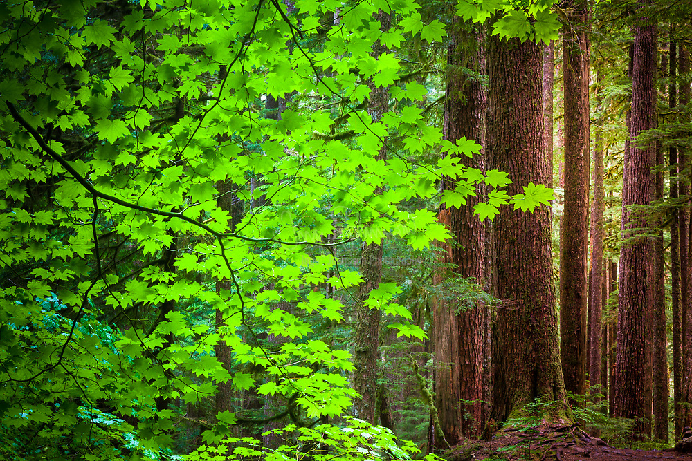 """Sol Duc area in Olympic National Park, The name Sol Duc means """"magic waters"""""""