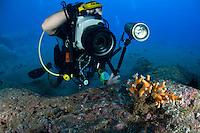 Mission - Monk SealDesertas Islands – Deserta Grande - Madeira, Portugal. August 2009.<br /> Tree Coral - Dendrophyllia ramea