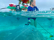 Swimming with sharlks and sting rays, Bora Bora, Society Islands, French Polynesia; South Pacific