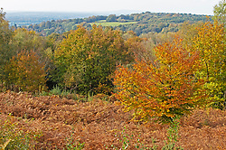 ©Licensed to London News Pictures 19/10/2020  <br /> Sevenoaks, UK. Autumnal colour at Toys Hills woodland, Sevenoaks, Kent. Photo credit:Grant Falvey/LNP