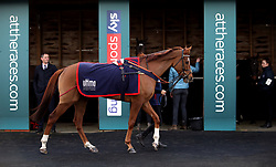 A horse is led around the parade ring before the first race during the Injured Jockeys Fund Charity Raceday at Plumpton Racecourse.