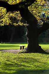 """""""A Quiet Spot"""" Endcliffe Park Sheffield..21 October 2012.Image © Paul David Drabble"""