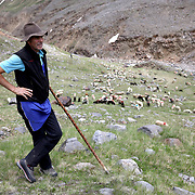 """Shepherd Hugo Gurschler, 62, watches sheep at the summer pasture """"Rofenberg"""" located at 2,400 meters above sea level in the region of Tyrol, Austria, June 9, 2018. Picture taken June 9, 2018. REUTERS/Lisi Niesner - RC1981C1E1A0"""