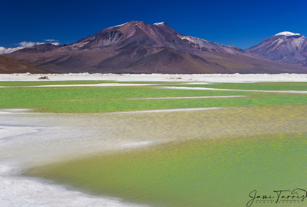 """The green salt lake """"Salar de Surire"""" is a natural monument and home to 3 species of flamingos in the Parinacota region of the Chilean Andes, Chile, South America"""