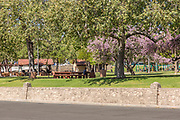 People Sitting at Hart Park in Orange California