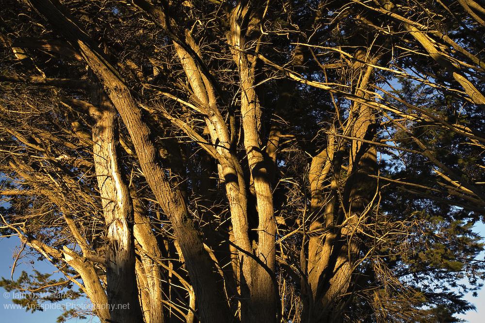 Tree Light, Tasmania