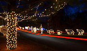Car lights cause streaks in a long time-exposure as they drive through the Way of Lights holiday light display at the National Shrine of Our Lady of the Snows in Belleville on December 3, 2019. This is the 50th anniversary of the annual light display, which runs from 5 pm to 9 pm through December 31.<br />Photo by Tim Vizer