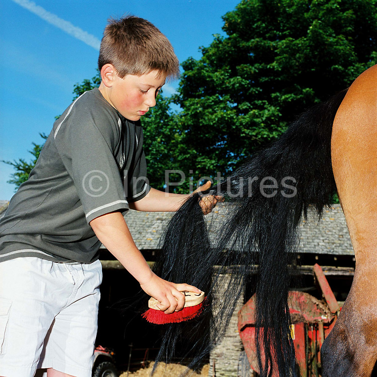 Exmoor hill farmer's son Giles Hawkins grooms his horses tail with a brush at Warren Farm, Simonsbath, Somerset, UK