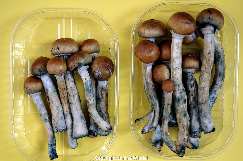 Fresh Colombian magic mushrooms legally on sale in Camden market London June 2005  soon selling them will be illegal.