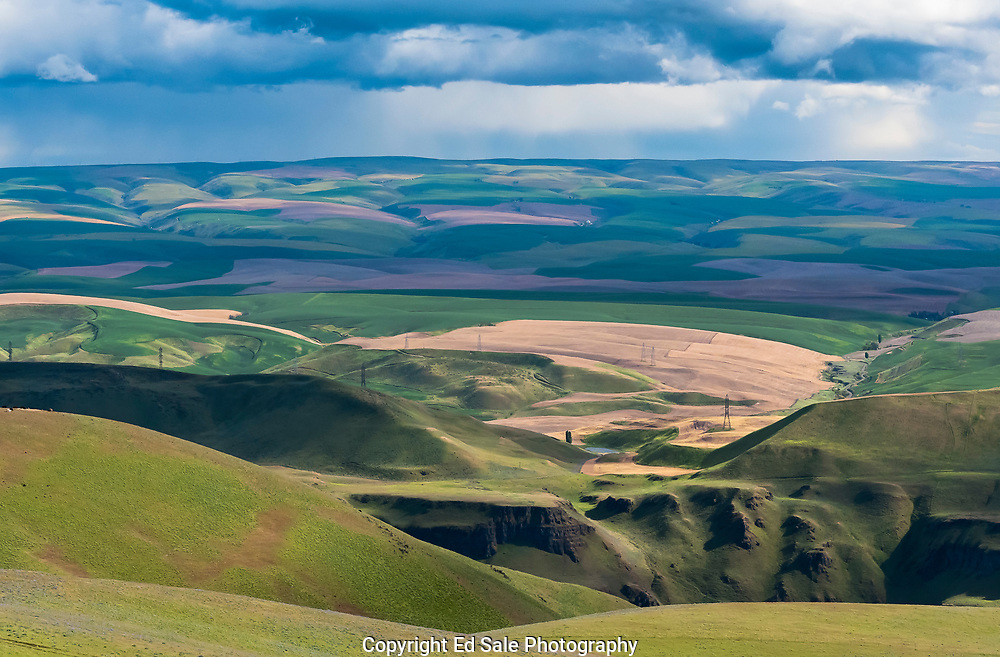 Storm clouds and rain highlight the greens and purples of the rolling spring farm land of the Columbia River Plateau in Wasco County, Oregon