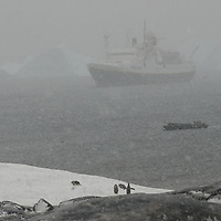 During a heavy snowstorm, the National Geographic Endeavor anchors near a Gentoo Penguin rookery on Booth  Island, Antarctica.