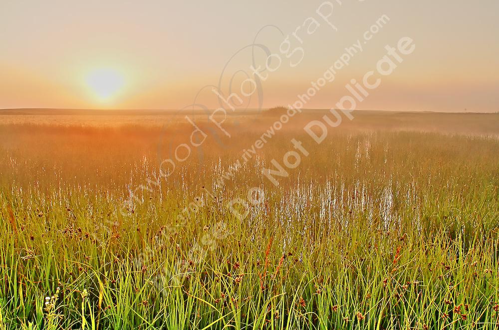 Foggy Sunrise near Indus, AB