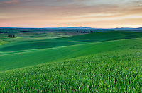 Dawn over the rolling hills of green wheat fields in the Palouse region of the Inland Empire of Washington
