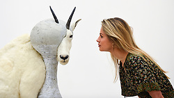 "© Licensed to London News Pictures. 27/09/2018. LONDON, UK. A staff member views ""Christian Dior - J'adore (Mountain Goat)"", 2008, by Steve Bishop. Preview of ""Black Mirror"", a major new exhibition featuring the work of 26 contemporary artists, at the Saatchi Gallery.  The show explores art's role in social satire and how political uncertainty has influenced art of recent years and runs 28 September to 13 January 2019.   Photo credit: Stephen Chung/LNP"