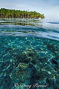fringing reef, Tobi Island, Southwest Islands, Palau or Belau, Micronesia, ( Western Pacific Ocean )