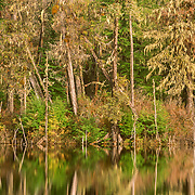 As this beaver pond was quite near Petersburg I was able to observe them quite often here.