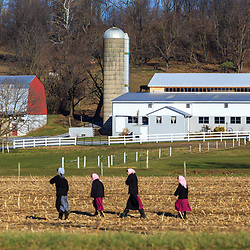 our Amish women walk through a Lancaster County field in early winter.