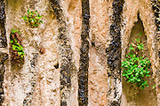 Hanging garden at the Weeping Wall, Zion National Park, Utah