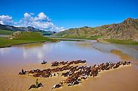 Mongolie, Province de Ovorkhangai, Vallee de l'Orkhon, riviere de l'Orkhon, des cavaliers mongols et un troupeau de chevaux traversant la riviere // Mongolia, Ovorkhangai province, Orkhon valley, Orkhon river, Nomad camp, Mongolian horserider with their herd of horses crossing the river