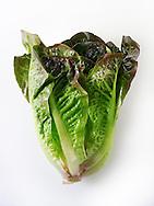 Fresh whole red leaved mini Cos lettuce