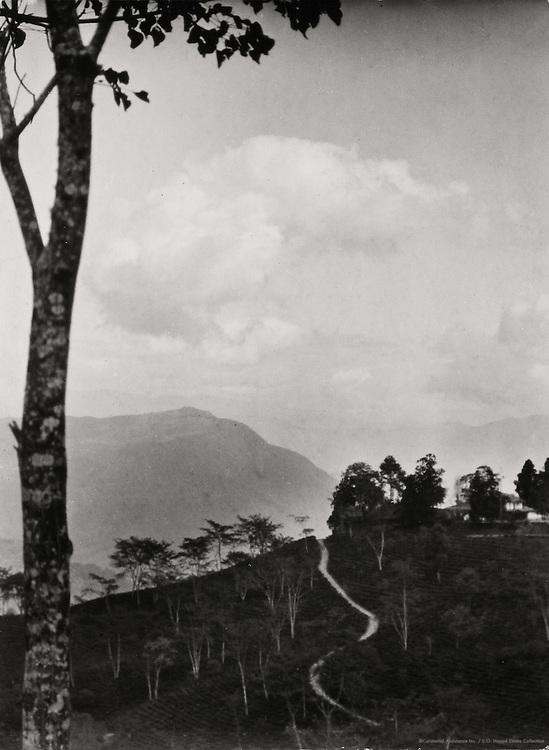 Teesta Bridge, Teesta Valley on the Way to Siliguri, India, 1929