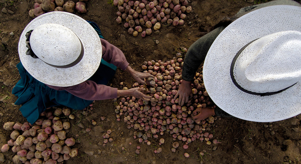Residents of Cotani Alto, Bolivia, like other farmers in the high Andean altiplano, work hard to produce potatoes, the staple of their diet.