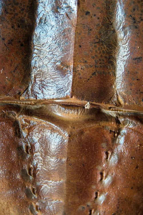 Horseshoe Crab (Limulidae) Abstract, Castine, Maine, US