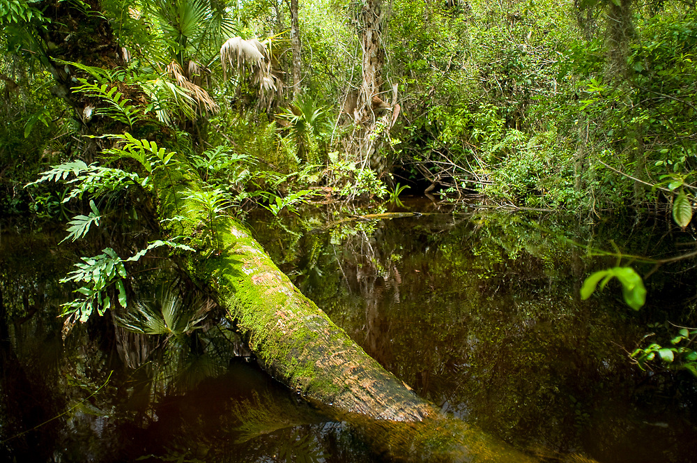 Fakahatchee Strand State Park in the Florida Everglades, a World Heritage Site.