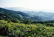 Hilly landscape of Dagomys Tea Plantation, Sochi, Russia 1997