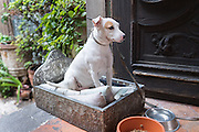 A dog sits in his custom tinwork bed in San Miguel de Allende, Mexico.